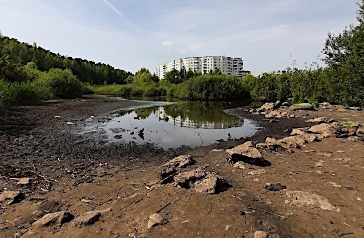 В Перми из-за аномальной жары пересохло уникальное «Утиное болото»