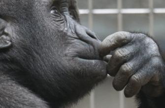 новый зоопарк в Перми хотят ввести в эксплуатацию в 2023 году